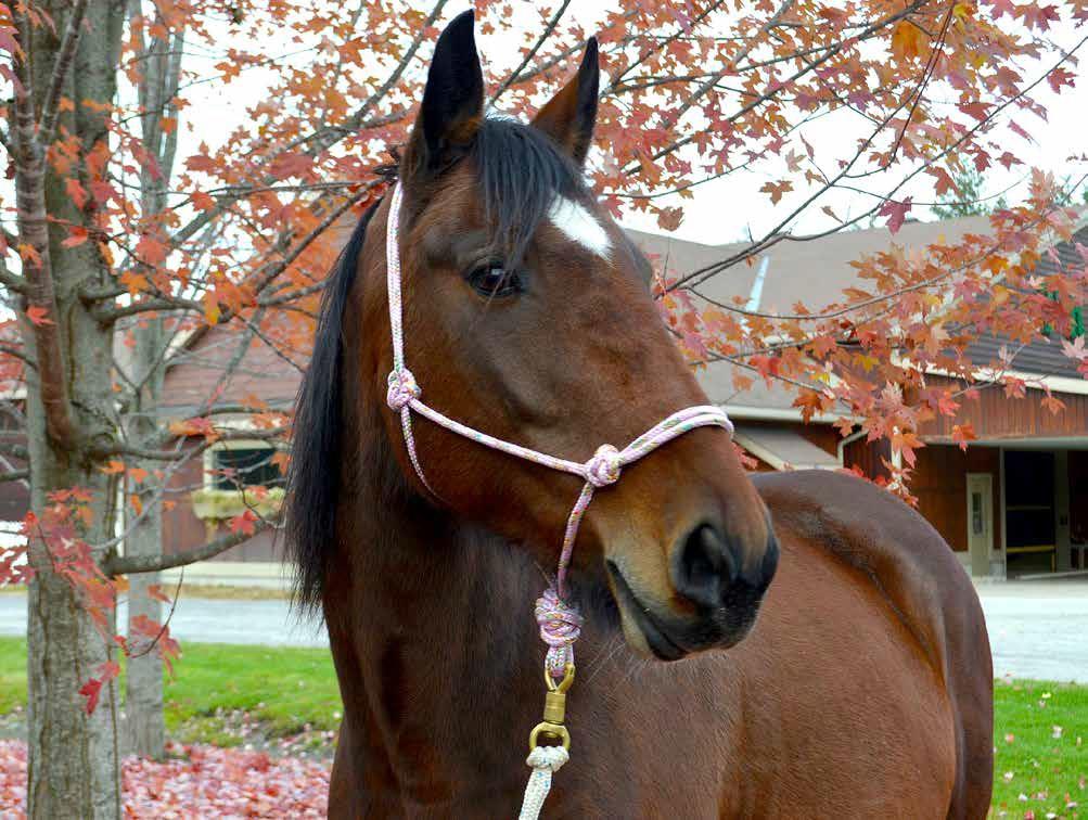 Horse: Abby