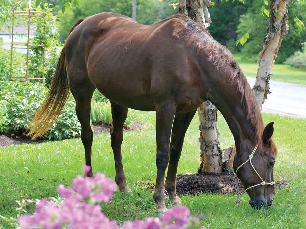 Horse: Belle