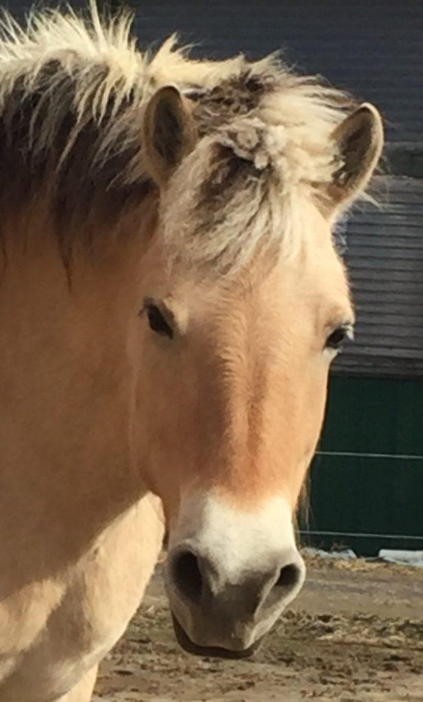 Horse: Phoebe